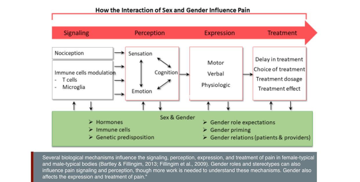 Several biological mechanisms influence the signaling, perception, expression, and treatment of pain in female-typical and male-typical bodies (Bartley & Fillingim, 2013; Fillingim et al., 2009). Gender roles and stereotypes can also influence pain signaling and perception, though more work is needed to understand these mechanisms. Gender also affects the expression and treatment of pain.