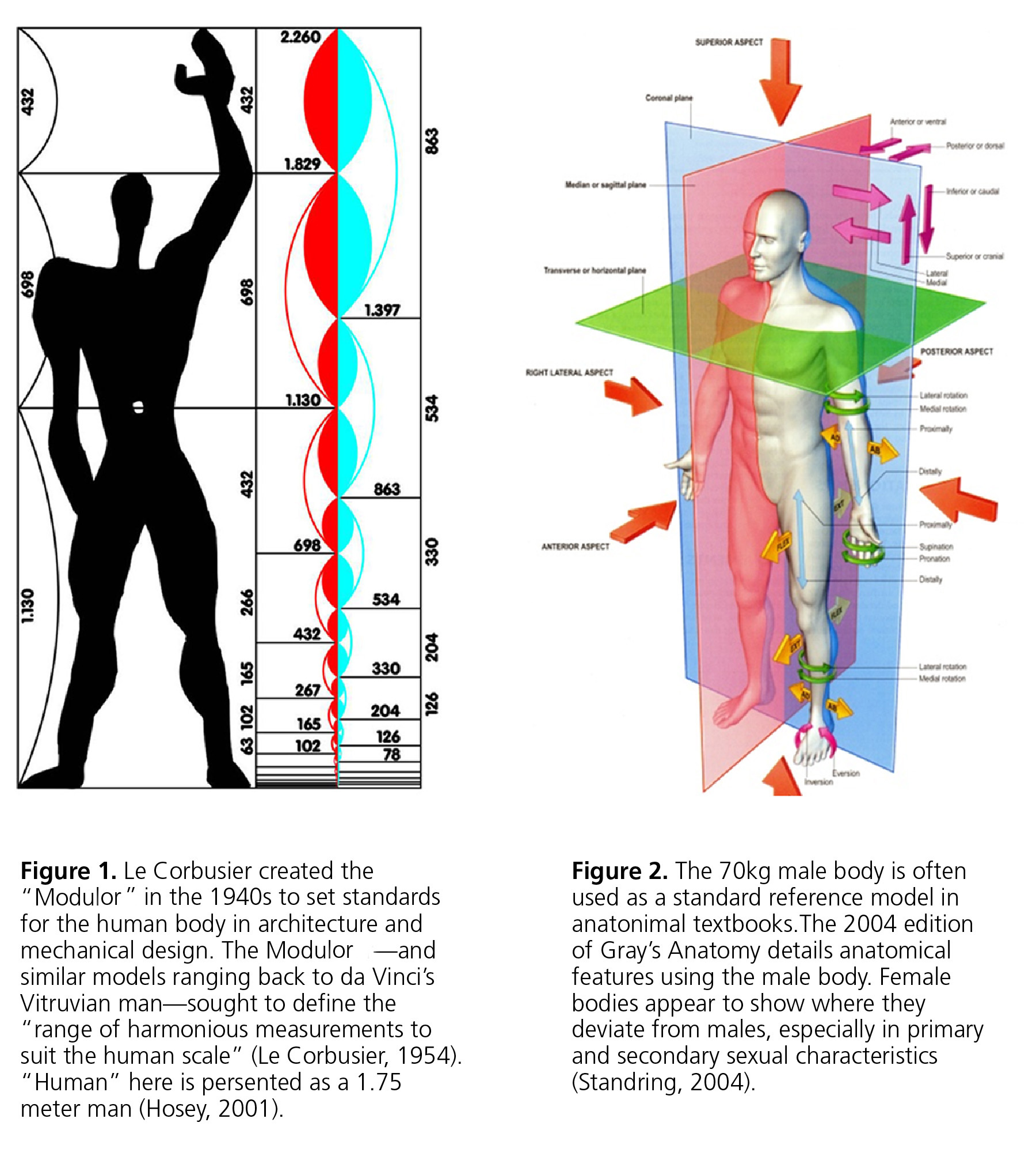 Le Corbusier Modulator and Gray's anatomy male body