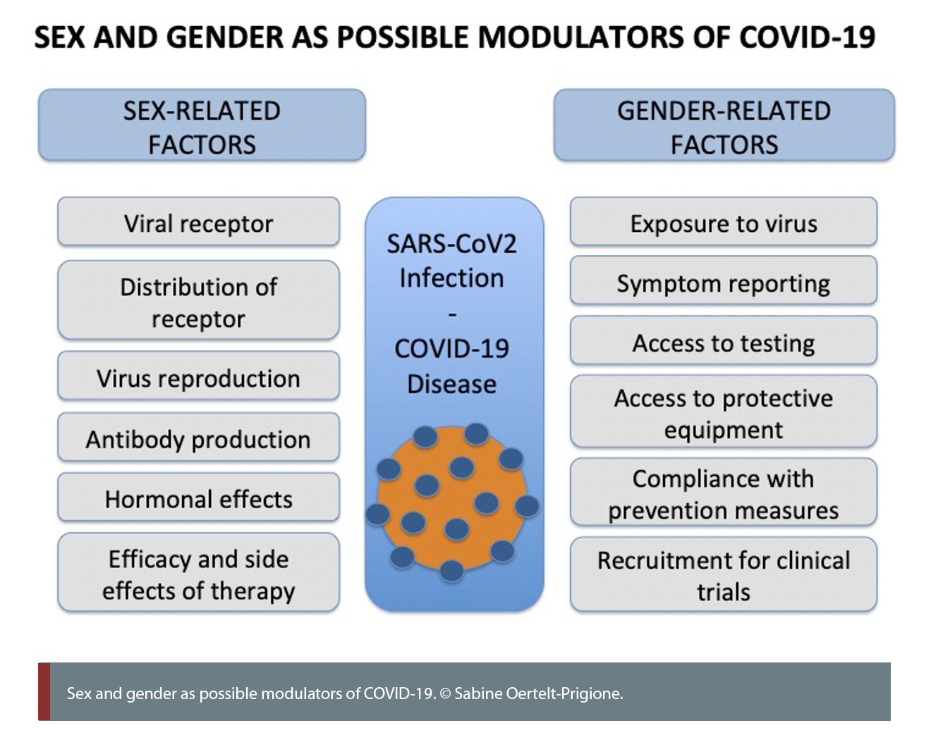 sex and gender as possible modulators of Covid 19