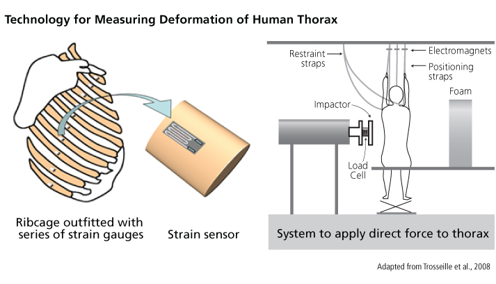 technology for measuring deformation of Human Thorax