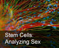stem cell tile